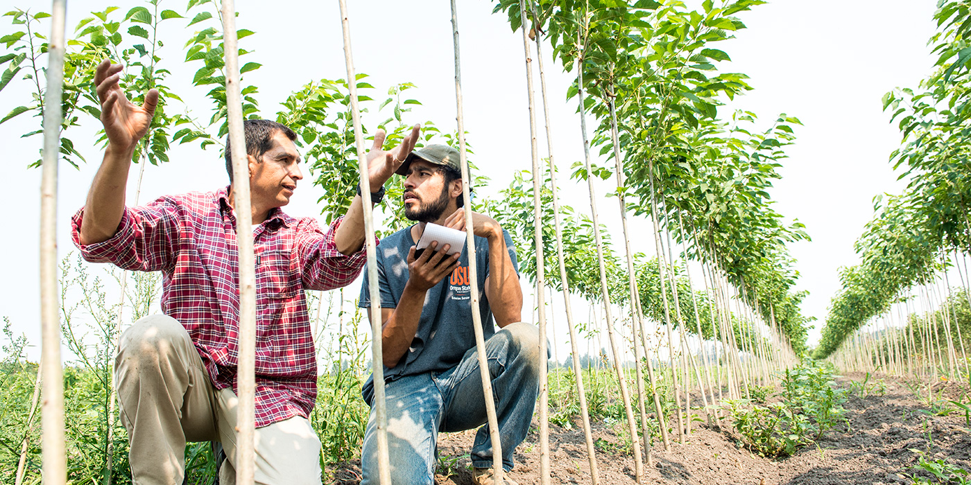 growers examining young trees