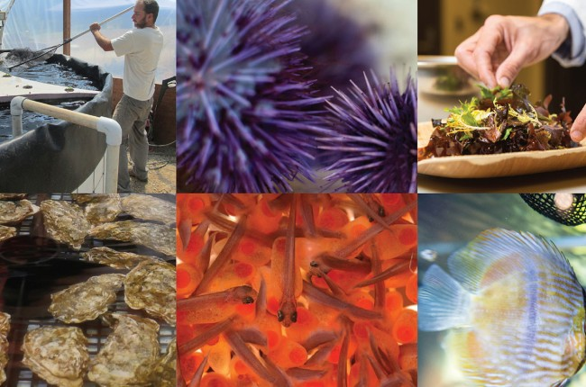 shots of different sea life: seaweed, urchins, fish
